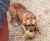 Rescue dog Danner
