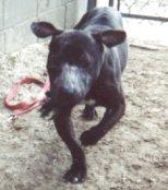 Rescue Dog Martin