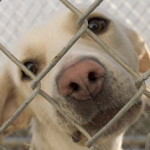 Our mission is to unify New England rescues and shelters.