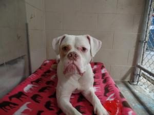 Adopt Bella the dog