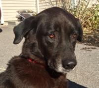 Adopt Casey the Dog