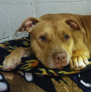 Forever Home Rescue New England Hours