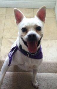 Adopt Barkley the Dog