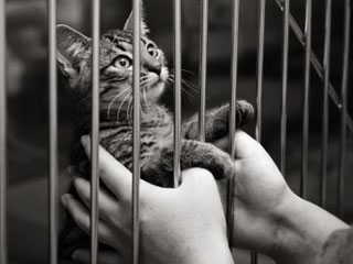 Cat behind bars with human hands.