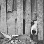 Dog Sticking Nose through Fence