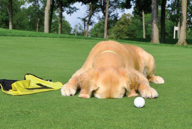 Help our dog fundraiser, play golf