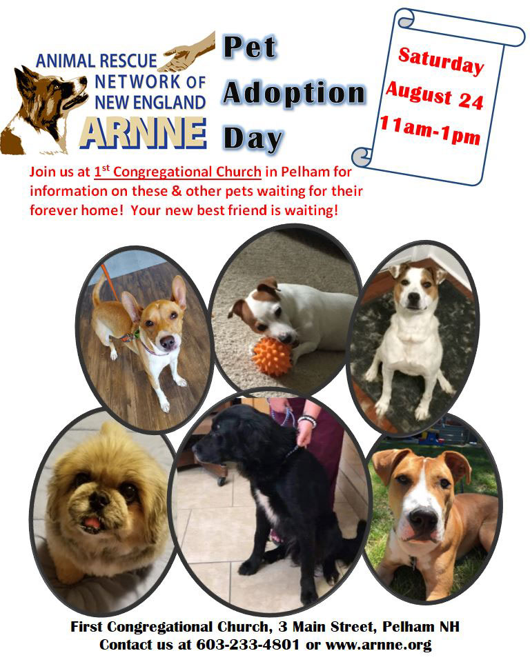 pet adoption day aug 24 2019
